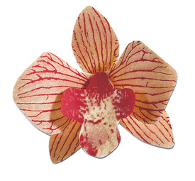 PCB Chocolate Transfer Sheets-Orchid Flowers. (Each Sheet Makes 9 Flowers)  11x15 Use with #ORCHID-1 and ORCHID-2